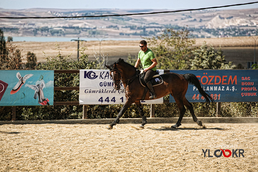 International K9&Horse Club; At Eğitimi; Binicilik; Atlı spor 1
