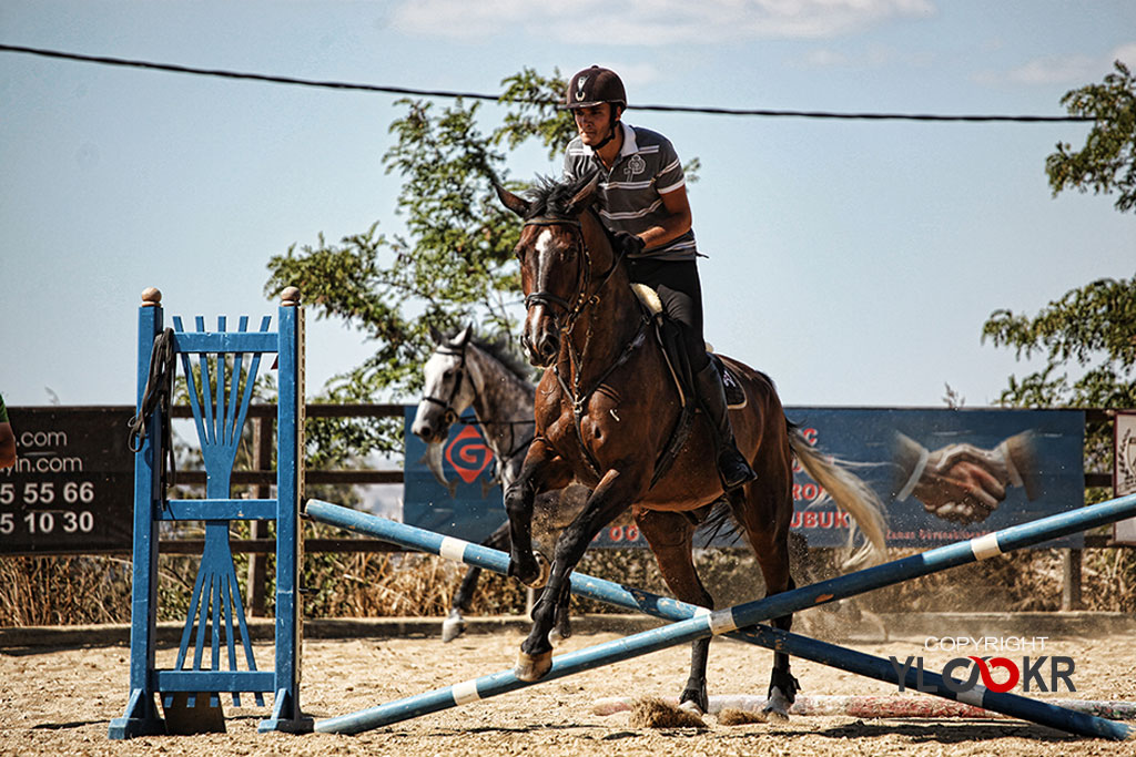 International K9&Horse Club; At Eğitimi; Binicilik; Atlı spor 10