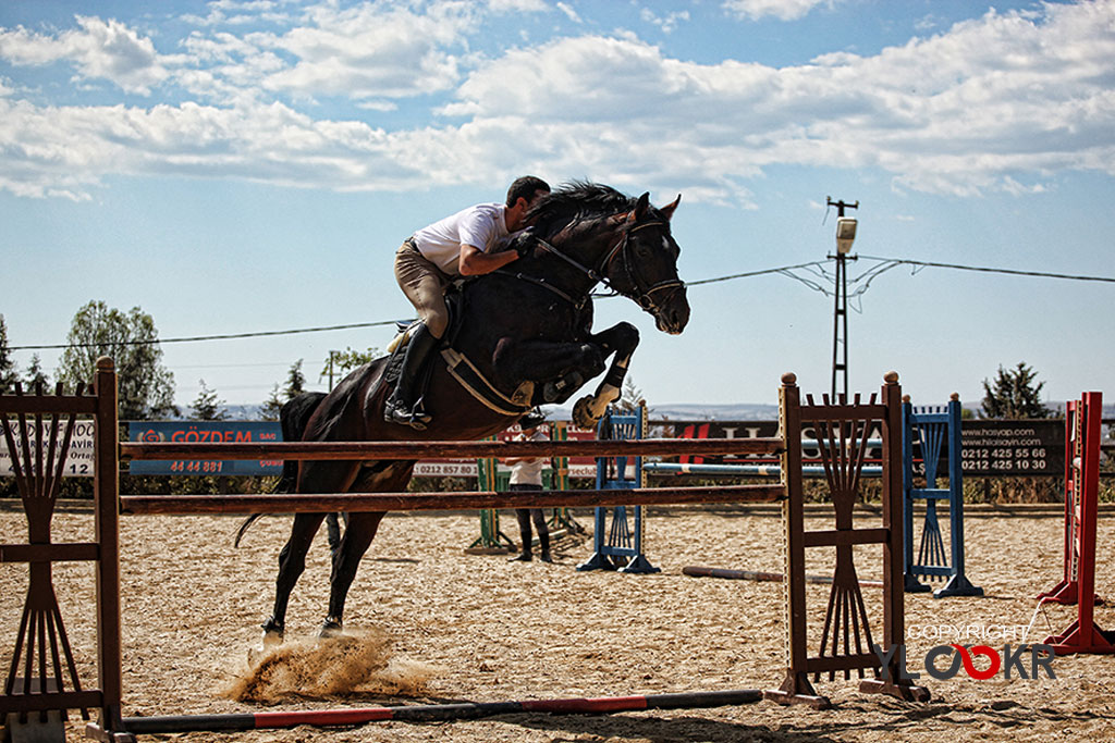 International K9&Horse Club; At Eğitimi; Binicilik; Atlı spor 13