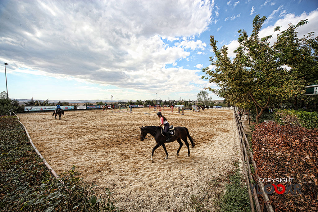 International K9&Horse Club; At Eğitimi; Binicilik; Atlı spor  14