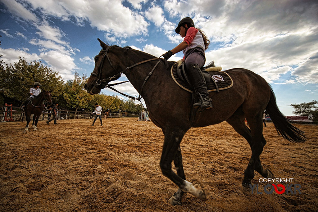 International K9&Horse Club; At Eğitimi; Binicilik; Atlı spor  16
