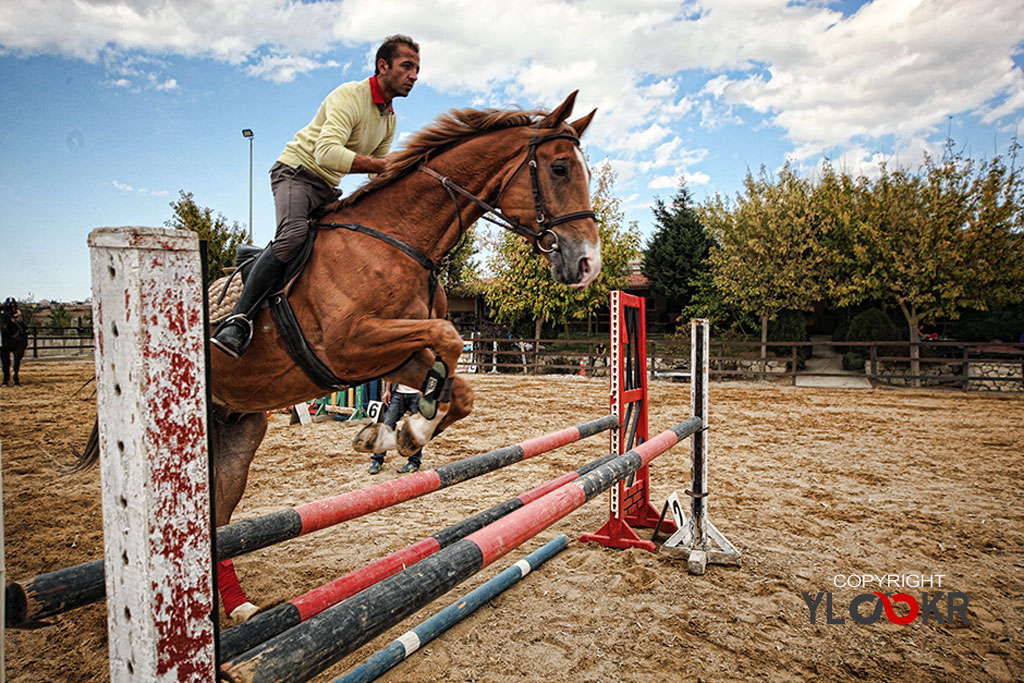 International K9&Horse Club; At Eğitimi; Binicilik; Atlı spor 19