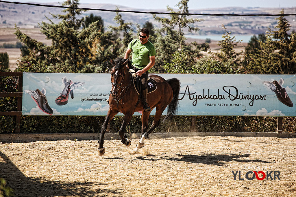 International K9&Horse Club; At Eğitimi; Binicilik; Atlı spor 2