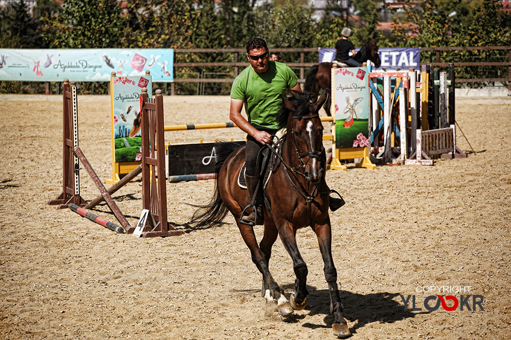 International K9&Horse Club; At Eğitimi; Binicilik; Atlı spor 3