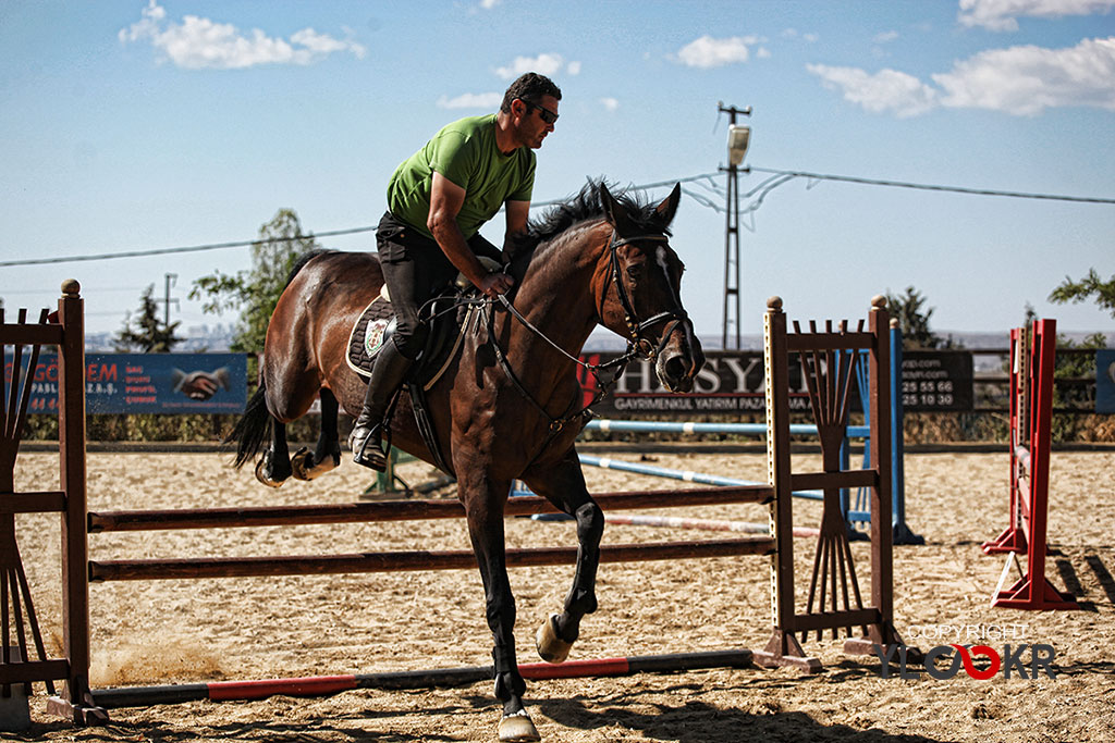 International K9&Horse Club; At Eğitimi; Binicilik; Atlı spor 4